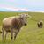 tehenek · zöld · mező · hegyek · farm · tájkép - stock fotó © byrdyak