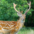 belo · comprometido · animais · selvagens · jovem · masculino · pinote - foto stock © byrdyak