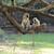 monkey on a branch stock photo © byrdyak