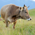 mucca · montagna · rosolare · estate · giorno - foto d'archivio © byrdyak