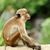 обезьяны · каменные · Blue · Sky · Таиланд · ребенка · глазах - Сток-фото © byrdyak
