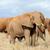 слон · парка · Кения · Африка · ребенка · трава - Сток-фото © byrdyak