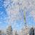 kış · kar · fırtınası · aralık · tatil · Colorado · resimleri - stok fotoğraf © byrdyak