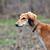 vadászkutya · zsákmány · erdő · halott · díszállat · vadászat - stock fotó © byrdyak