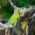 camaleão · Sri · Lanka · bebê · fundo · cor - foto stock © byrdyak