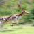 cervo · giovani · cacciatore · animale - foto d'archivio © byrdyak