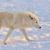 ősz · kilátás · Saskatchewan · font · tó · kutya - stock fotó © byrdyak