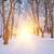 winter forest stock photo © byrdyak