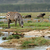 zebra · parque · África · Quênia · abstrato · natureza - foto stock © byrdyak