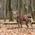Jeleń · lasu · charakter · przyrody · mężczyzna - zdjęcia stock © byrdyak