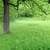spring meadow with big tree stock photo © byrdyak