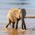 elefante · parque · Quênia · África · bebê · grama - foto stock © byrdyak
