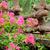 abstrato · amarelo · rosa · flores · estúdio - foto stock © byrdyak