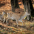 whitetail deer standing in autumn day stock photo © byrdyak