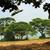 старые · дуб · Кора · день · дерево · зеленый - Сток-фото © byrdyak