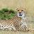 africano · leopardo · retrato · belo · mamífero - foto stock © byrdyak