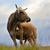 feketefehér · tehén · eszik · zöld · legelő · fű - stock fotó © byrdyak
