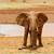 bebek · park · Kenya · Afrika · aslan · Afrika - stok fotoğraf © byrdyak