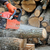 Chainsaw stock photo © byrdyak