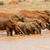 elefánt · tó · park · Kenya · Afrika · víz - stock fotó © byrdyak