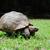 africano · tartaruga · isolado · branco · natureza · animal - foto stock © byrdyak