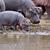 nijlpaard · familie · Kenia · afrika · nijlpaard · buiten - stockfoto © byrdyak
