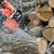 Chainsaw and tree stock photo © byrdyak