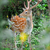 whitetail deer standing in summer wood stock photo © byrdyak