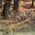 herten · najaar · veld · jonge · gras · bos - stockfoto © byrdyak