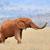 olifant · kudde · stoffig · natuur · afrikaanse - stockfoto © byrdyak
