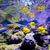 Karib · trópusi · halfajok · vízalatti · tenger · kilátás - stock fotó © byrdyak
