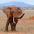 Elephant in National park of Kenya stock photo © byrdyak