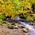 outono · cachoeira · montanha · mata · rochas - foto stock © byrdyak