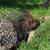 草 · クローズアップ · ビッグ · 小さな · 自然 · 公園 - ストックフォト © byrdyak