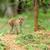Sri · Lanka · maymun · oturma · ağaç · aile · doğa - stok fotoğraf © byrdyak