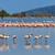 tó · Kenya · Afrika · sereg · sekély · víz - stock fotó © byrdyak