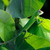 isolado · camaleão · branco · olho · olhos · fundo - foto stock © byrdyak