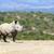 fehér · orrszarvú · ivóvíz · játék · tartalék · Dél-Afrika - stock fotó © byrdyak