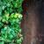 bloem · omhoog · rock · muur · natuur · blad - stockfoto © byrdyak