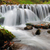 осень · лес · водопада · пород · желтый · листьев - Сток-фото © byrdyak