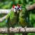 papagaio · pássaro · sessão · natureza · casal · fundo - foto stock © byrdyak