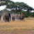 olifant · water · afrikaanse · olifant · spelen · park · Namibië - stockfoto © byrdyak