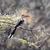 red billed hornbill stock photo © byrdyak