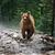 grizzly · fut · zsákmány · park · Alaszka · természet - stock fotó © byrdyak