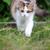 jovem · gato · verão · grama · primavera - foto stock © byrdyak