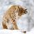 рысь · красивой · зима · дерево · глазах - Сток-фото © byrdyak