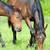 lovas · ló · legelő · nő · nyár · farmer - stock fotó © byrdyak