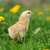 weinig · kip · gras · ei · voorjaar · baby - stockfoto © byrdyak