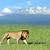 szavanna · tájkép · Afrika · Kenya · növényvilág · fű - stock fotó © byrdyak