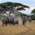 sétál · fű · park · Dél-Afrika · természet · madár - stock fotó © byrdyak